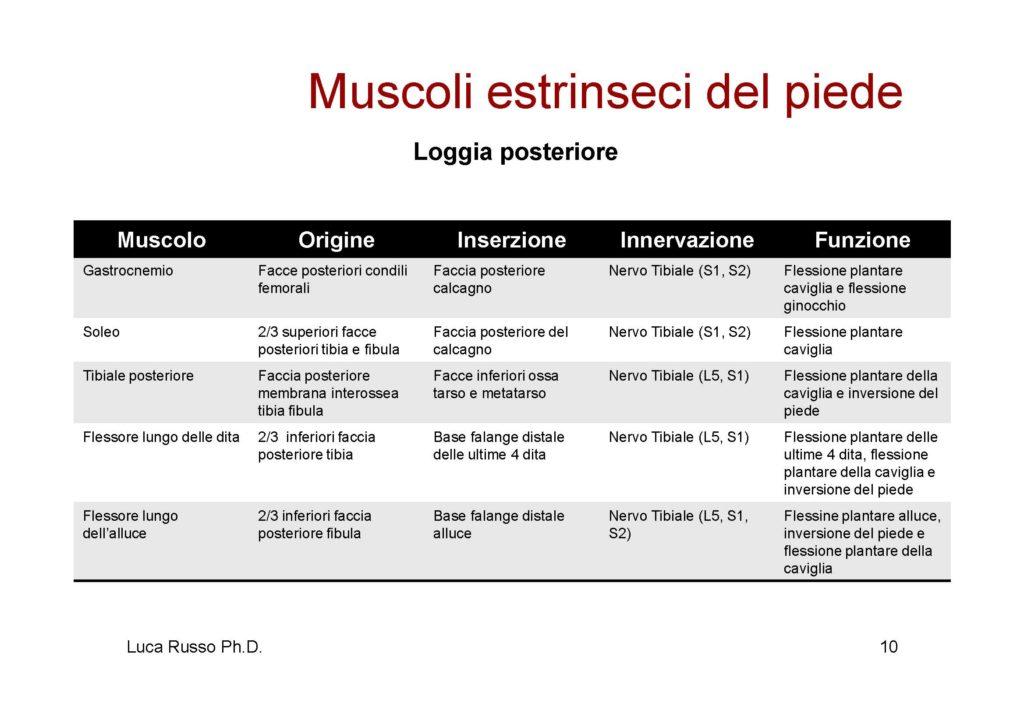 MuscolaturaPiede_Pagina_2