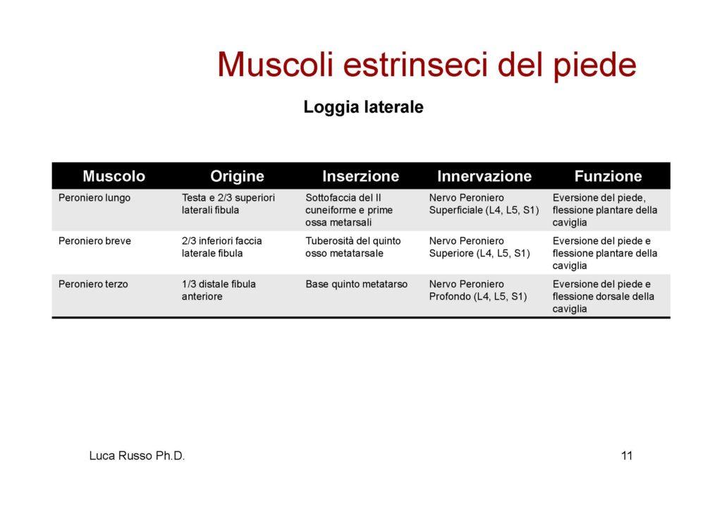 MuscolaturaPiede_Pagina_3