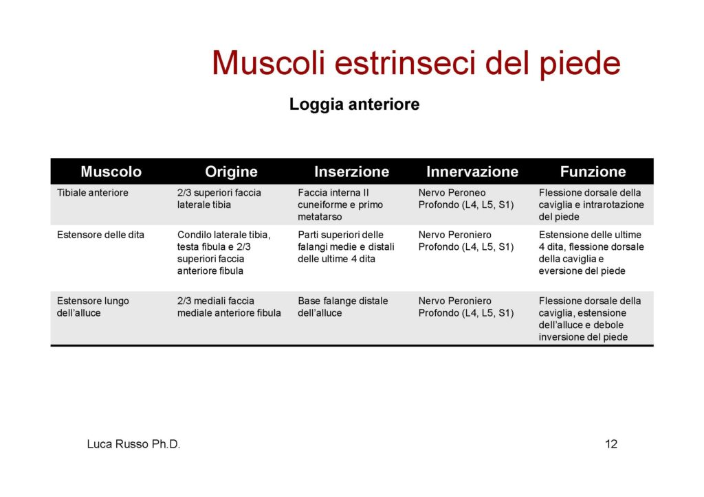 MuscolaturaPiede_Pagina_4