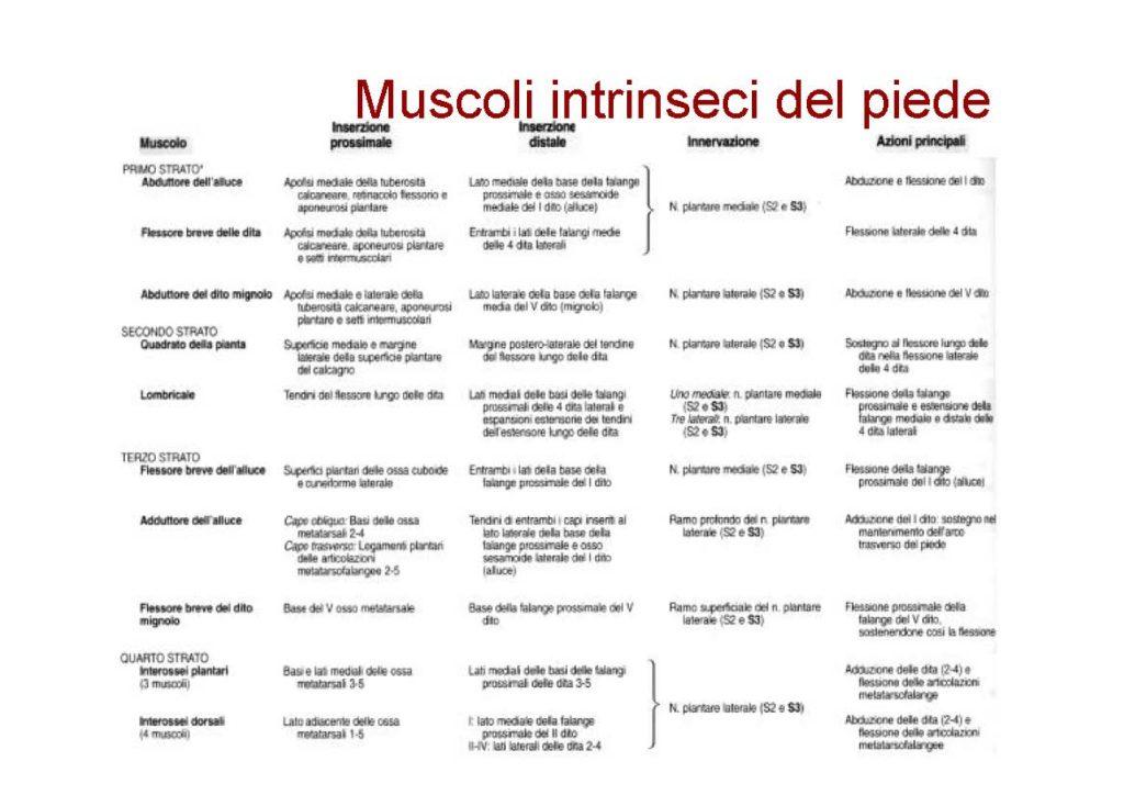 MuscolaturaPiede_Pagina_5
