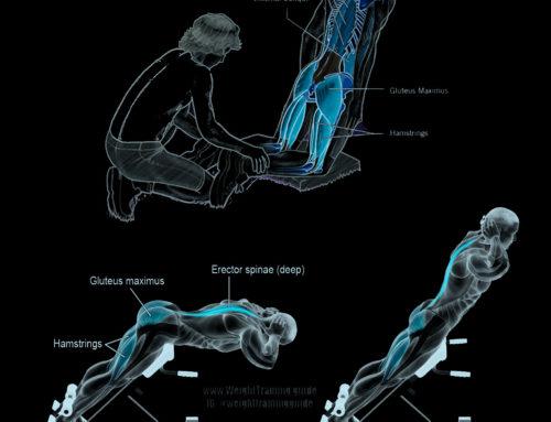 Differenze tra il Nordic Hamstring Exercise e l'Hip Extension Exercise sulla lunghezza e la forza dei fasci muscolare dei muscoli posteriori della coscia.