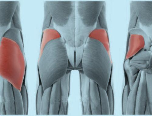 Effetti di due protocolli di allenamento della muscolatura glutea